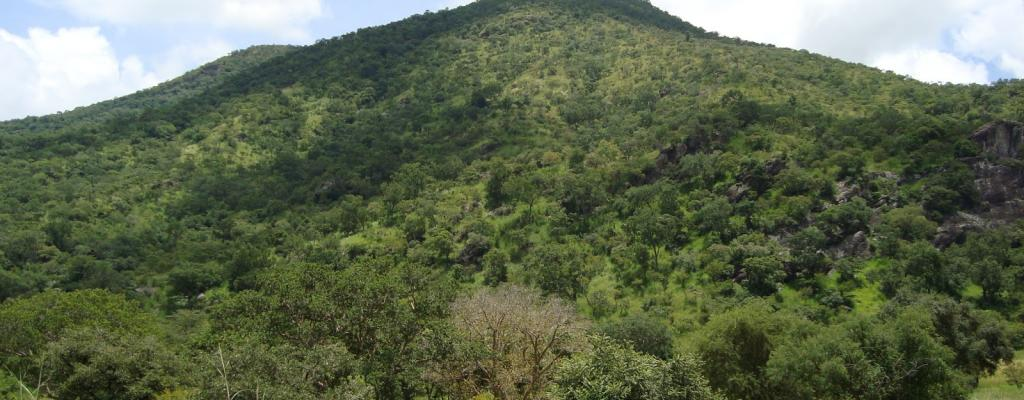 Moyo District is mountainous and ever green containing different species of living things